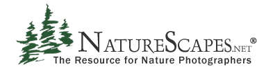 NatureScapes.net Live Radio - With Greg Downing and EJ Peiker