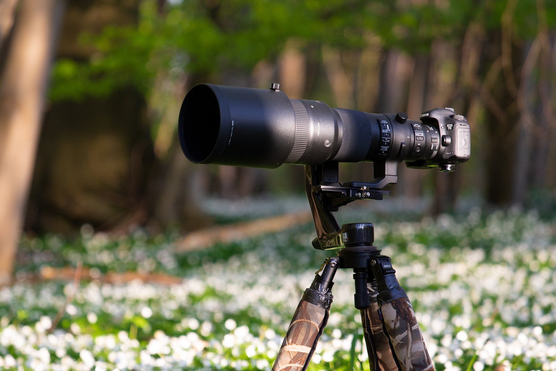 Sigma 500mm F 4 Dg Os Hsm Sports Lens Review Tobias Hjorth Nature For Nikon 70 300mm 56
