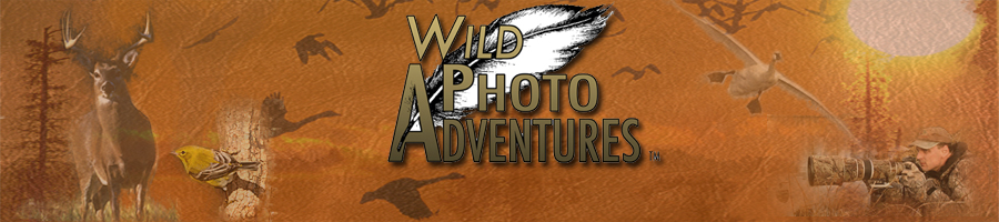Video: Wild Photo Adventures™ Week 40 on Really Right Stuff Blog